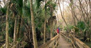 Get Back to Basics at Morningside Nature Center