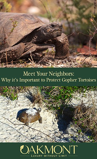 Meet Your Neighbors: Why It's Important to Protect Gopher Tortoise